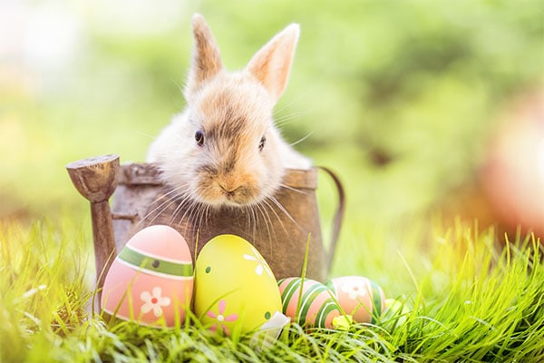best easter egg hunts in greenville sc 2018